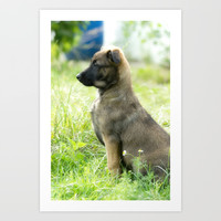 Cute Malinoi shepherd 8 weeks old Art Print by Tanja Riedel