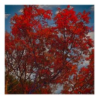 Beautliful Autumn colors Poster