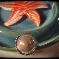 Dreaming of the Sea 2- Tiny Seashell Glass Ring