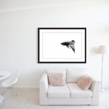 x ray betta fish fine art photography black and white photography canvas