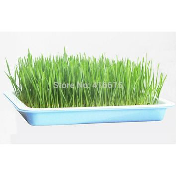 Square Medium Plastic Hydroponics Nursery Pots Garden Tools Seeds Sprout Vegetable Planter Double Layers Nursery Seedling Plate