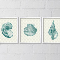 Set of 3 Vintage Seashell Illustrations 8x10 prints, Printable Digital file, Teal, Blue, Wall art, Home decor, Beach, Ocean, Nautical, Retro