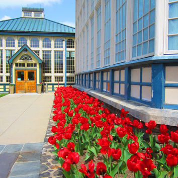 8X10 Rawlings Conservatory Photo, Colorful Architecture, Spring Landscape, Ruby Red Tulips