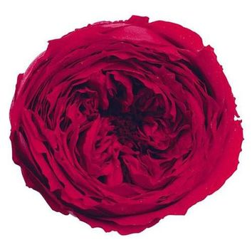 """Box of 8 Preserved Rose Heads in Red - 2"""" Wide"""