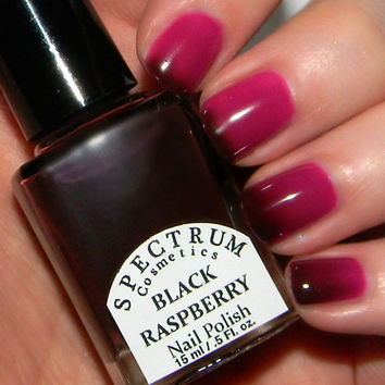 BLACK RASPBERRY Color Changing Thermal Nail Polish Dark Maroon to Pink