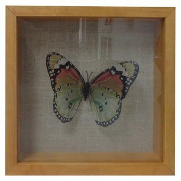 Threshold™ Butterfly Shadow Box - 1 Butterfly