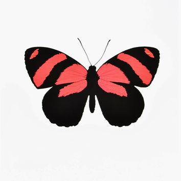 Butterfly #10 Print