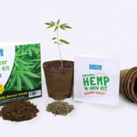 Hemp Starter Grow Kit & Discovery Booklet (Limited Edition)