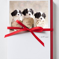 Terrier - Mix Puppies Valentine Greeting Card 10 Pack