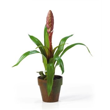 SheilaShrubs.com: Mauve Potted Single Sword Bromeliad Silk Flower Arrangement 4502-MA by Nearly Natural : Artificial Flowers & Plants