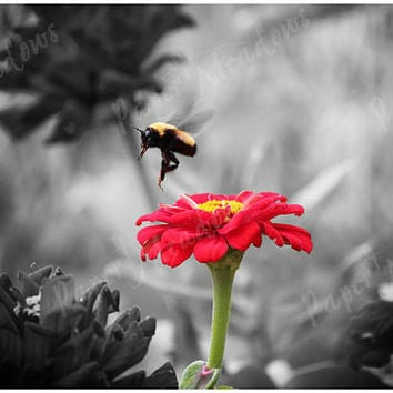 Nursery Photo, Photography Download, Flying Bee, pink flower, magical, surreal, black white and pink