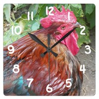 Chicken Rooster Square Wall Clocks
