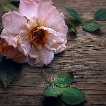 Wild Rose Instant Digital Download Art Photography Printable, vintage style photography, pink flower, shabby chic floral photo, still life