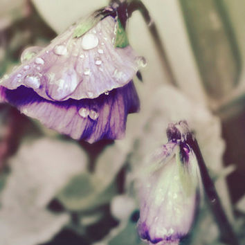 Flower Wall Art, Purple Wall Art, Violet Pansies, Flower Print, Lilac Grey Green, Nature Photography, Raindrops, Sage Green, Rain Art