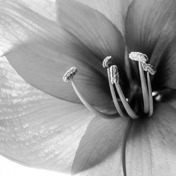 Flower Photography, Botanical Photography, 8x10 print, Black and White, Chic, Dramatic, Elegant, Fine Art Photography, Nature, Macro
