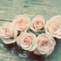 Rose photograph- pink, pastel, pale, light, romantic, mint, shabby chic, flowers, rustic, muted colors, still life, fine art print, 8x10