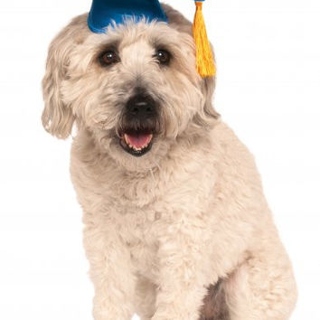 Blue Dog Graduation Cap