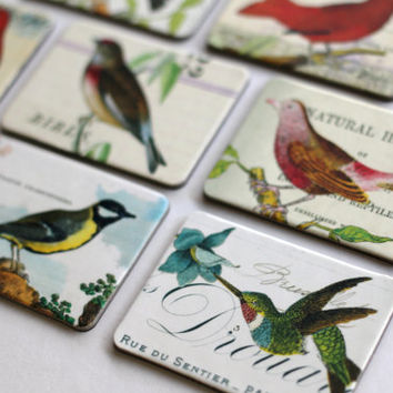 Vintage Bird Magnets by Cavallini Vintage Archived Birds, 5 Botanical Fridge Magnets Spring Decor, Office Supplies