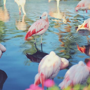 Retro Flamingo One- Photography, Water, Garden, Summer, Palm Springs, Happy