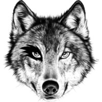 The Wolf Next Door Art Print by Florever