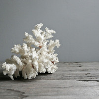 large coral branch by ohalbatross on Etsy