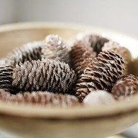 FROSTED PINECONES VASE FILLER