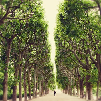 Paris Print, Trees, Nature, Dreamy, Symmetry, Rustic, Romance, Beige, Emerald Green, Shabby Chic, Jardin des Plantes, Spring Decor, France