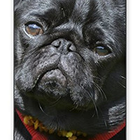Adorable Black Pug Dog Direct Print (not a sticker) iPhone 4 Quality Hard Snap On Case for iPhone 4 4S 4G - AT&T Sprint Verizon - White Case Cover
