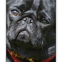 Adorable Black Pug Dog Direct Print (not a sticker) iPhone 5C Quality TPU SOFT RUBBER Snap On Case for iPhone 5C - AT&T Sprint Verizon - White Case