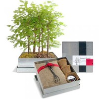 Bonsai Forest Kit: Dawn Redwood : Branch: Sustainable Design for Living