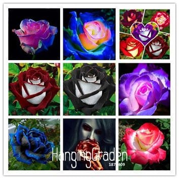New Seeds 2017!White Heart Pink Side Rose Seeds 24 Colors Plants Potted Rose Rare Flower Seeds Balcony 50 PCS,#KJ1W18