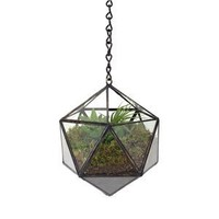 Old Faithful Shop — Suspended Tetra Terrarium