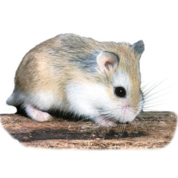 Best Petsmart Hamsters Products on Wanelo