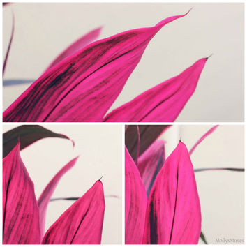 Set of 3 Pink Leaf Botanical Art Photography Prints - Tropical Decor
