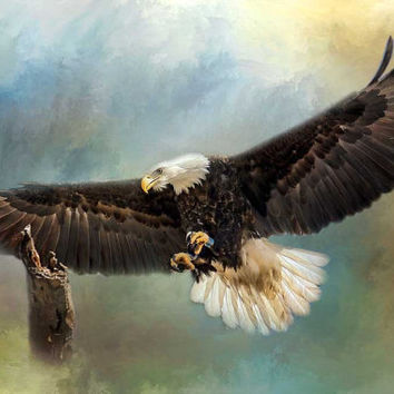 Approaching His Perch Bald Eagle, Bird of Prey, Texture, Wildlife, Photographic Print