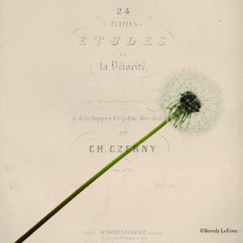 dandelion, typography, vintage, floral, dreamy, fine art photography