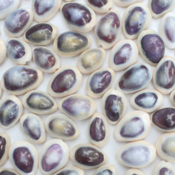 15 Purple and White Cowrie Seashells - Beach and Home Decor Seashell Craft Bulk Supply Small Jewelry Earring Ocean Sea Life