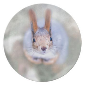Squirrel looks at you from the bottom up dinner plate