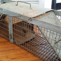 Vintage Metal Havahart Two Door Animal Trap Cage Great for Rustic Cabin Farmhouse Farm Decor Altered Art