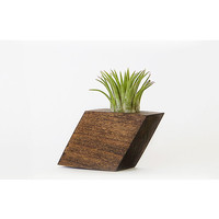Air Plant Holder - Tilt Diamond Dark