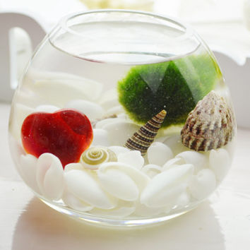 Heart Marimo Moss Ball ~ Japanese Moss Ball Aquatic Terrarium ~ White Bubble Shells ~ Glass Vase Kit ~ Home/Office Decor ~ Gift Idea