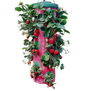Strawberry Upside Down Hanging Planter System Outdoor Garden Plant Planting