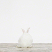 Baby Bunny No. 3 | Sharon Montrose | The Animal Print Shop | Baby Animal Photography Prints