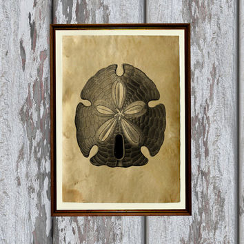Sand dollar print Old paper Antiqued decoration vintage looking 8.3 x 11.7 inches