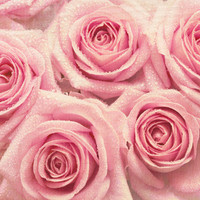For the love of pink roses Art Print by micklyn