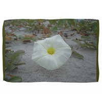 White Morning Glory on the Beach Towel