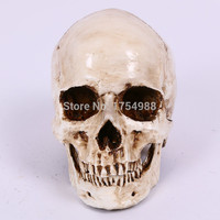 TAKAGISM game Door&Rooms supply Real life escape room game props decorate Resin White Head Skull Model Halloween Props