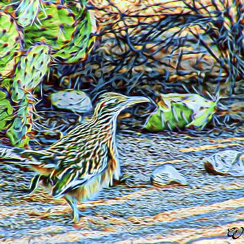 Abstract Desert Roadrunner Arizona Abstract Art Print,Photography, Wall Art Decor, Southwest Art, Arizona Wildlife Art