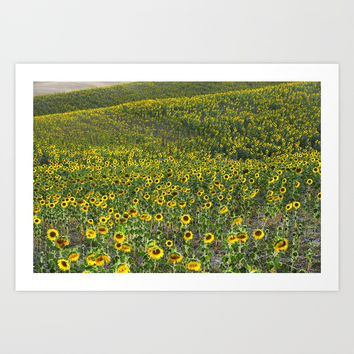 """Sunflowers"". Hills.  Fields... by Guido Montañés"