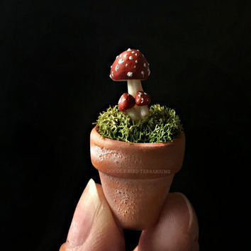 Potted Toadstool Amanita Muscaria Specimen Dollhouse Miniature